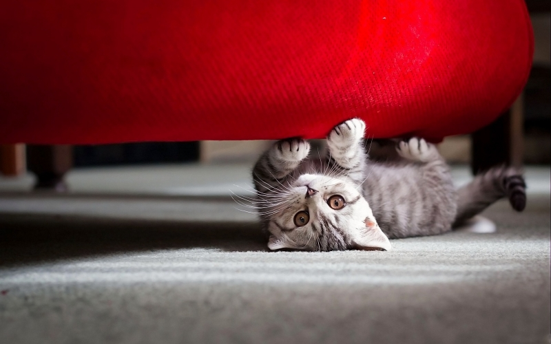 Dicas de decoração para quem tem gatos em casa 1