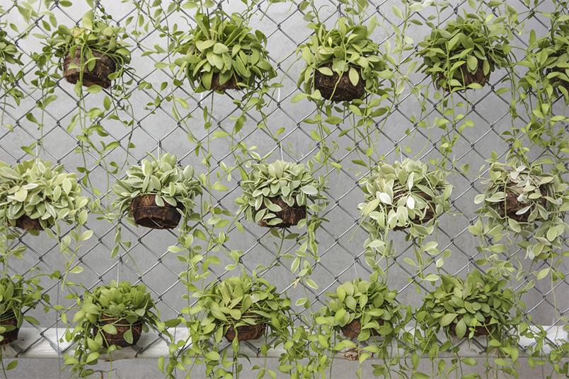 ideias baratas para jardim vertical : ideias baratas para jardim vertical:JARDIM VERTICAL DE TRELIÇAS METÁLICAS OU DE MADEIRA