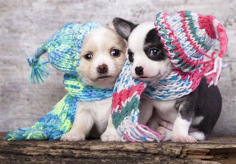 Como proteger seu animalzinho do frio