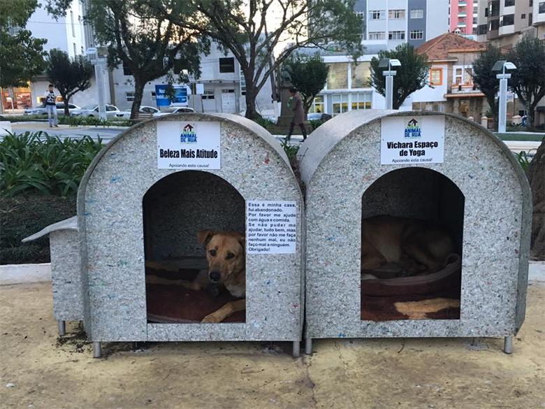 favoritos da semana 1 ajude um animal de rua