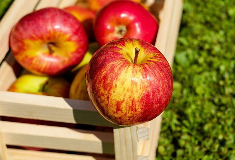 Como escolher frutas na feira 4