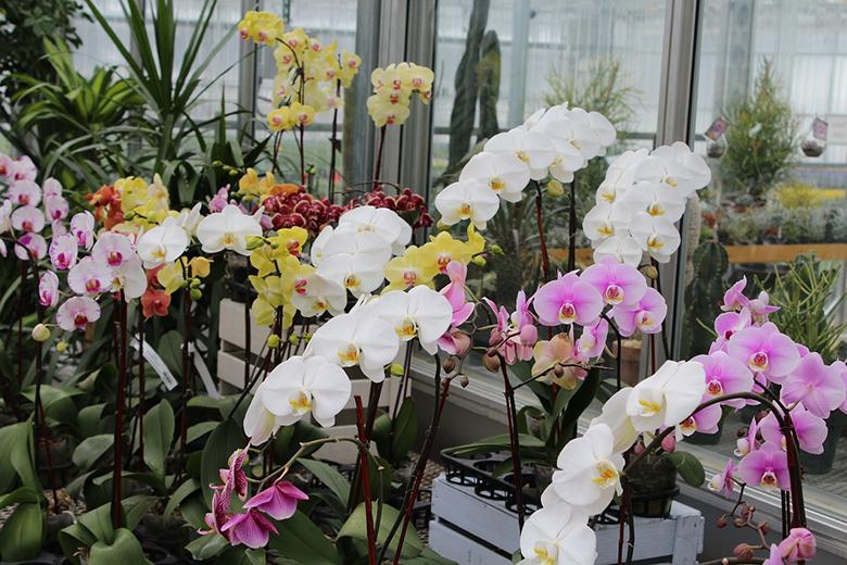 7-plantas-para-cultivar-dentro-de-casa-orquidea